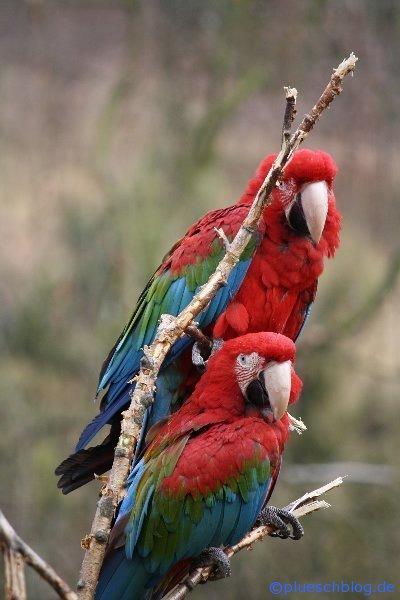 Vogelpark 12 75