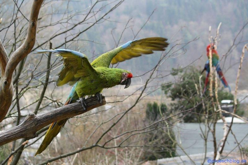 Vogelpark 12 76