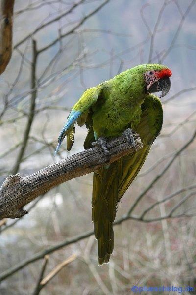 Vogelpark 12 78