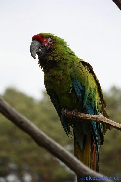Vogelpark 12 81