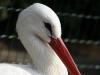 Vogelpark 12 03