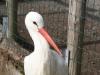 Vogelpark 12 04