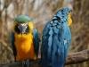 Vogelpark 12 13