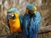 Vogelpark 12 14