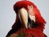 Vogelpark 12 19