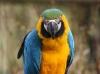 Vogelpark 12 21