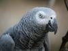 Vogelpark 12 23