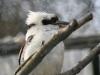 Vogelpark 12 31