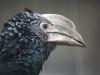 Vogelpark 12 60