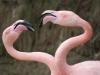 Vogelpark 12 73
