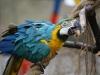 Vogelpark 12 74