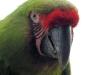 Vogelpark 12 77