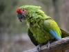 Vogelpark 12 79