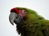 Vogelpark 12 80