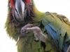 Vogelpark 12 82