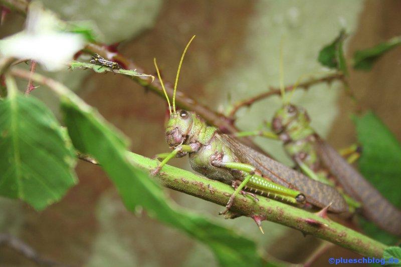 amazonaswelten-15