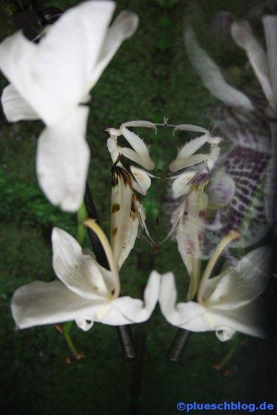 amazonaswelten-6