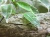 amazonaswelten-11