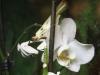 amazonaswelten-5