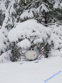 winterspaziergang_wilnsdorf-29