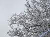 winterspaziergang_netphen-05
