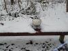 winterspaziergang_netphen-13