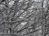 winterspaziergang_netphen-19