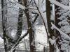 winterspaziergang_netphen-25