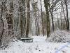 winterspaziergang_netphen-31