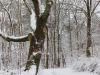 winterspaziergang_netphen-33