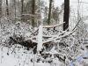 winterspaziergang_netphen-36