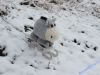 winterspaziergang_netphen-37