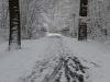 winterspaziergang_wilnsdorf-01