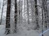 winterspaziergang_wilnsdorf-14