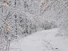 winterspaziergang_wilnsdorf-20