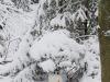 winterspaziergang_wilnsdorf-26