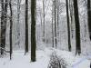 winterspaziergang_wilnsdorf-52