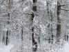 winterspaziergang_wilnsdorf-66