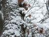 winterspaziergang_wilnsdorf-70