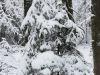 winterspaziergang_wilnsdorf-73