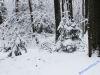 winterspaziergang_wilnsdorf-75