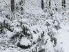 winterspaziergang_wilnsdorf-78
