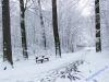 winterspaziergang_wilnsdorf-79