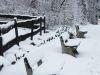 winterspaziergang_wilnsdorf-83