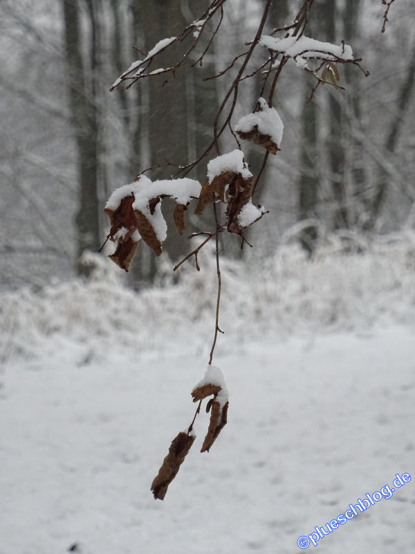 winterspaziergang_netphen-09