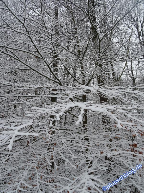 winterspaziergang_wilnsdorf-10