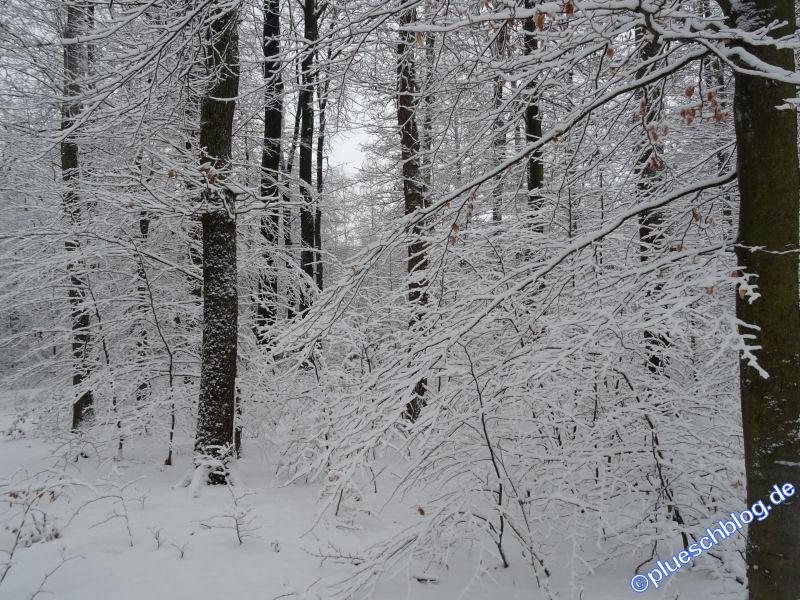 winterspaziergang_wilnsdorf-12
