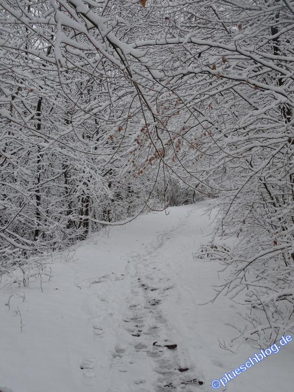 winterspaziergang_wilnsdorf-18