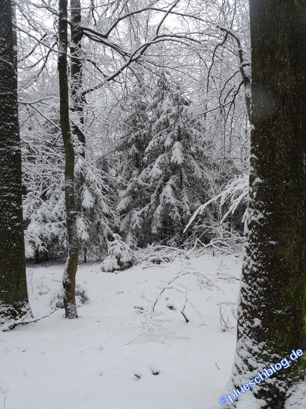 winterspaziergang_wilnsdorf-25