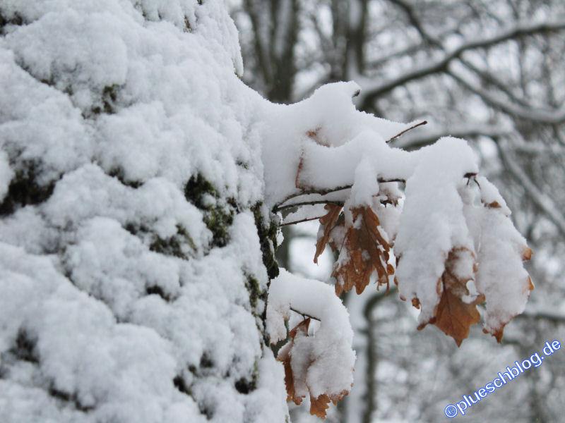 winterspaziergang_wilnsdorf-72